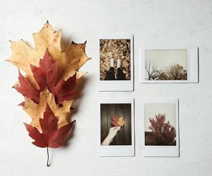 article, autumn, and fall image