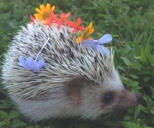 flowers, animal, and hedgehog image