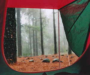 camping, forest, and tent image