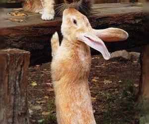 cat, animal, and rabbit image