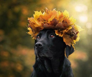 adorable, autumn, and crown image