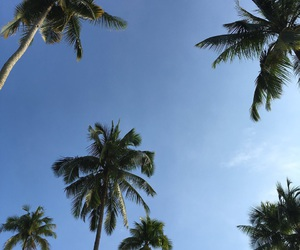 beautiful, coconut trees, and nature image