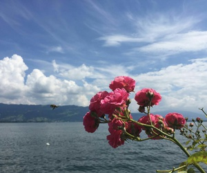 bodensee image