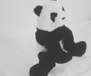 animal, blackandwhite, and panda image