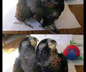 bird, funny, and pose image