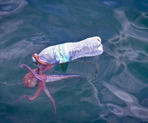 octopus, sea, and bottle image