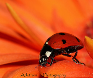 black, colorful, and flower image