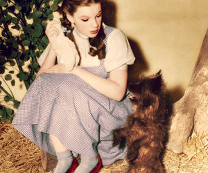 judy garland and toto image