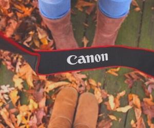 fall, tumblr, and tumblr quality image