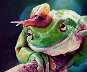 frog, happy, and friendship image