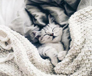 adorable, cat, and bed image
