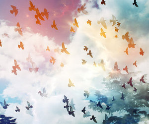 birds, colors, and clouds image