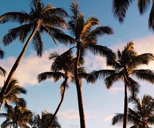 summer, nature, and palm trees image