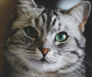 cat and beautiful image