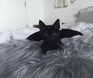 cat, black cat, and cute image