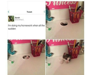 adorable, funny, and kitten image