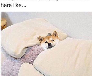 funny, bed, and dog image