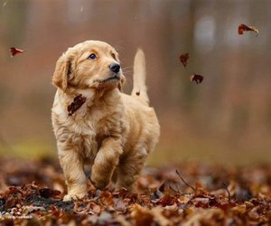 dog, autumn, and cute image