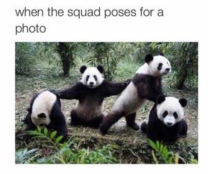 funny, panda, and squad image