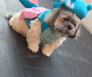 adorable, costume, and fluffy image