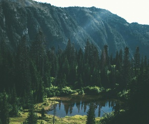 forest, nature, and wanderlust image