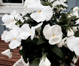 flowers, summer, and white image