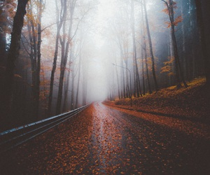 nature, road, and autumn image