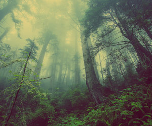 forest, mountain, and travel image