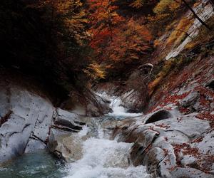 adventure, nature, and autumn image