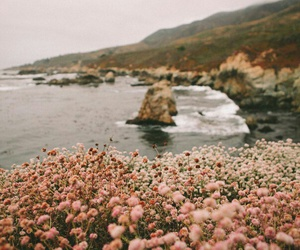nature, beauty, and flowers image