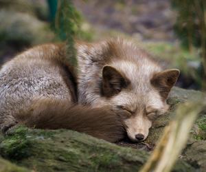 animal, nap, and sleeping image