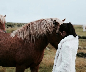 beautiful, horse, and iceland image