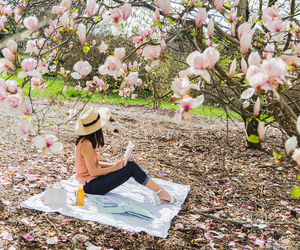 outdoor, photography, and picnic image