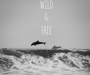 free, wild, and dolphin image