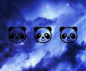blue, panda, and background image