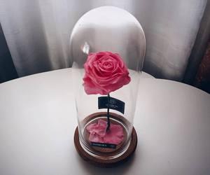 belle, flower, and rose image