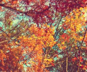 autumn trees colourful image