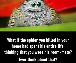 funny, life, and spider image