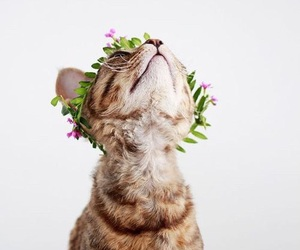flower crown and kitten image