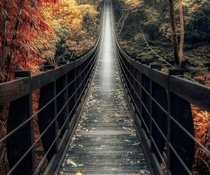 bridge and autumn image
