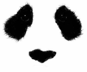 panda, animal, and black and white image