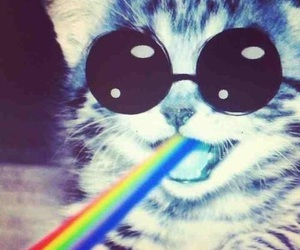 cat, rainbow, and hipster image