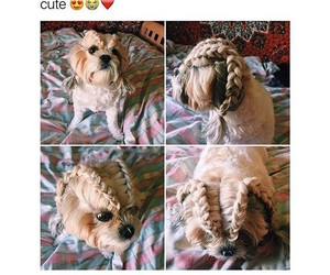 funny, hair, and cute image