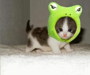 cute, cat, and frog image
