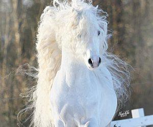 horse, beautiful, and white horse image