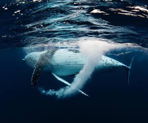 ocean, whale, and love image