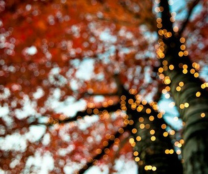autumn, fall, and fairy lights image