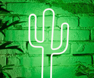 cactus, green, and tumblr image