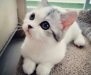 animal, beauty, and eyes image