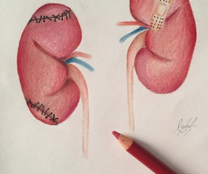 art, drawing, and kidney image